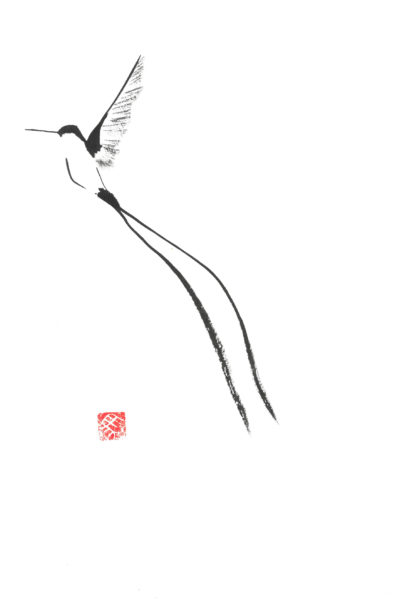 Beija-flor de Cauda Longa